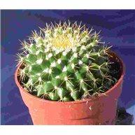 Mammilaria marksiana