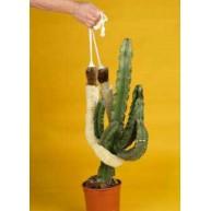 Cactus sling