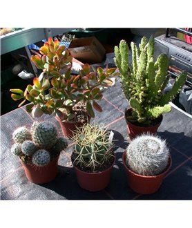 CACTUS or SUCCULENT COLLECTION Larger sizes
