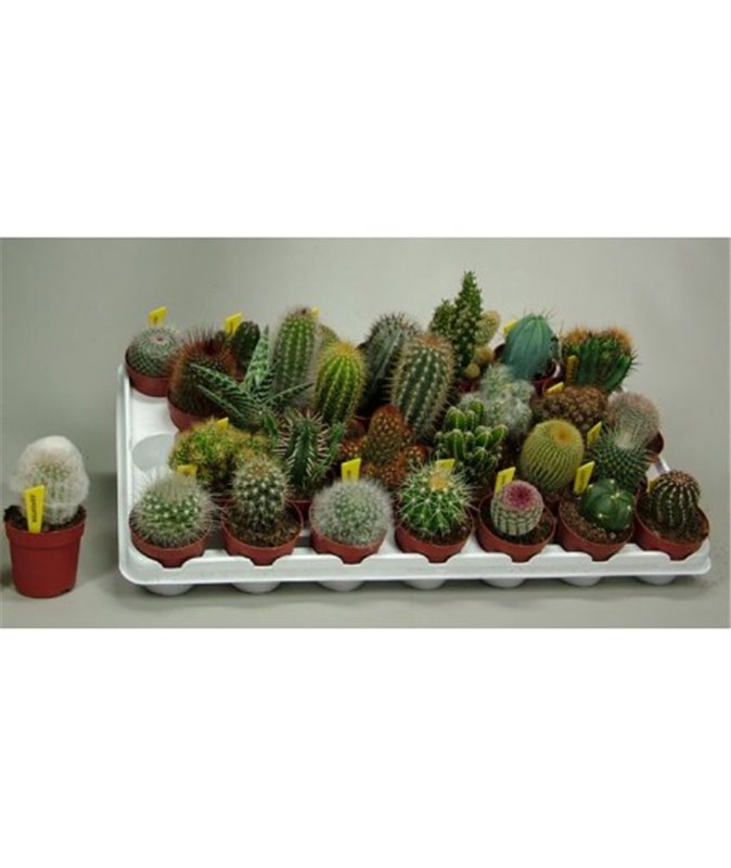BEGINNER'S CACTUS AND SUCCULENT COLLECTION