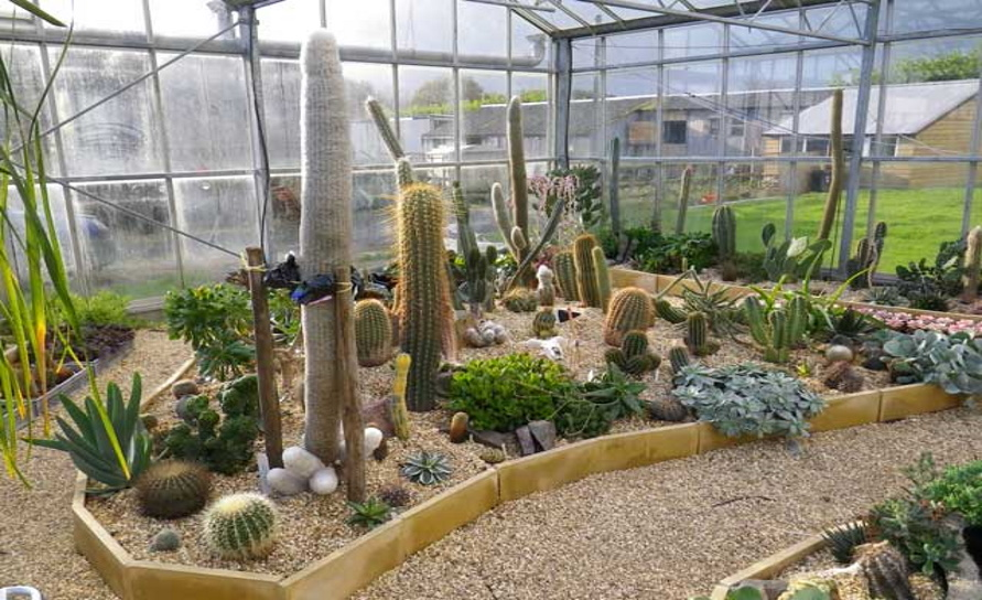 Cactus Shop Open Day 2020